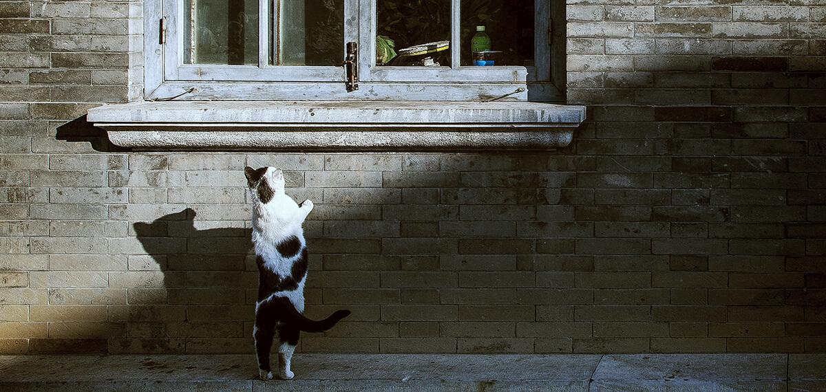 Je schattige kattenfoto's kun je beter niet op LinkedIn zetten